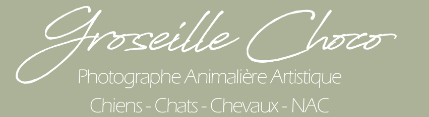 Groseille Choco